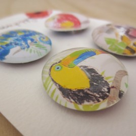 Tropical rainforest animals glass magnets with Toucan, Macaw, chameleon and Tiger