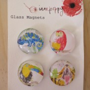 tropical rainforest magnets
